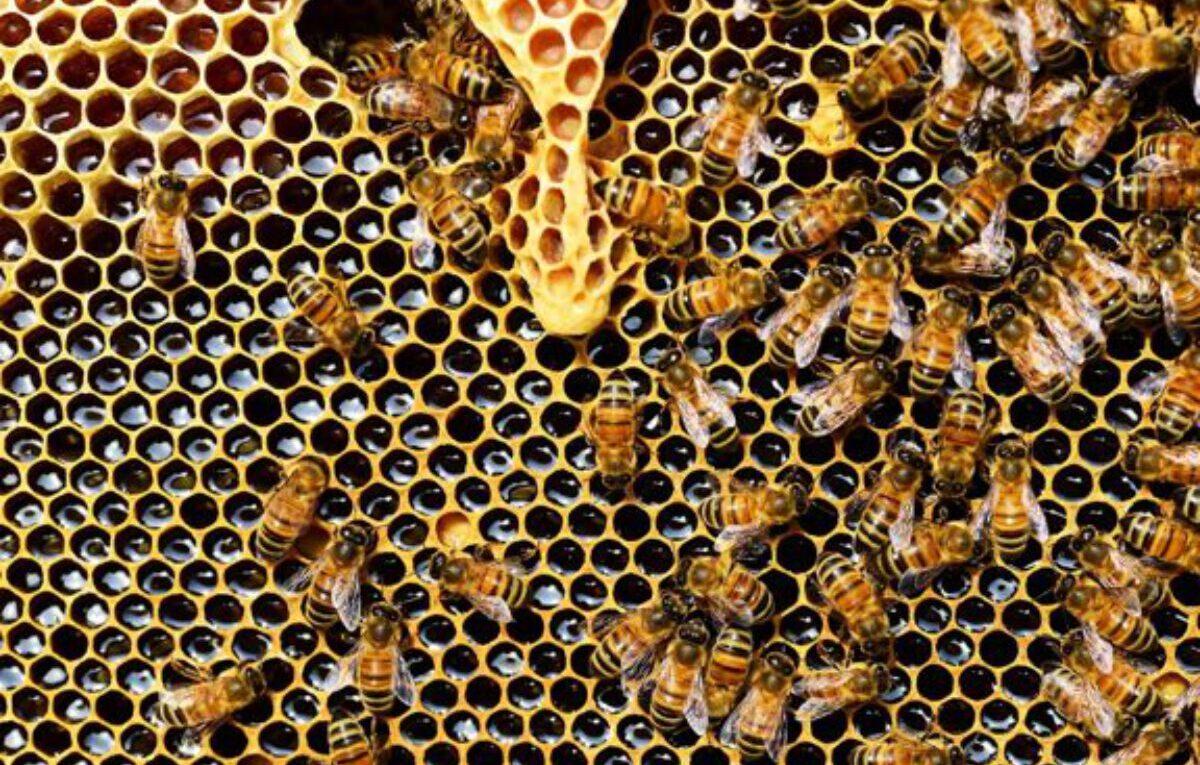 Como criar abelhas em casa?